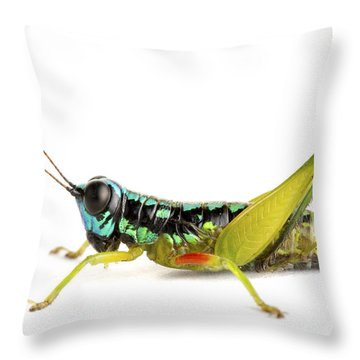 Grasshopper Barbilla Np Costa Rica Throw Pillow by Piotr Naskrecki