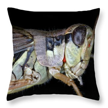 Grasshopper With Parasitic Mite Throw Pillow by Ted Kinsman