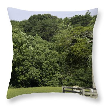Grave Of Lafayette Meeks Appomattox Virginia Throw Pillow by Teresa Mucha