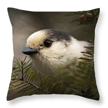 Gray Jay Playing Peek A Boo Throw Pillow by Inspired Nature Photography Fine Art Photography