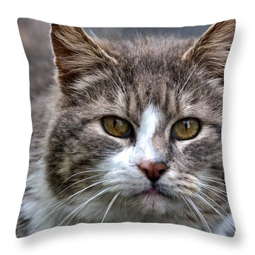 Gray Tabby Tux Cat Throw Pillow by Chriss Pagani