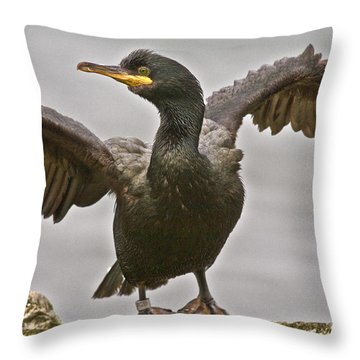 Great Black Cormorant Throw Pillow by Heiko Koehrer-Wagner