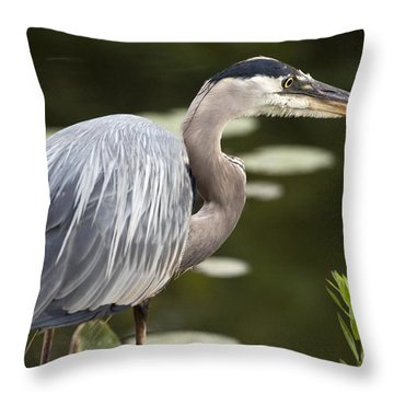 Great Blue Heron  Throw Pillow by Jeannette Hunt