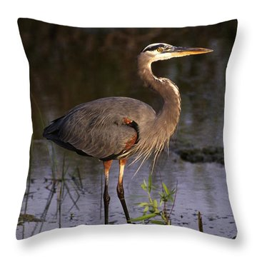 Great Blue Heron Throw Pillow by Natural Selection Ralph Curtin