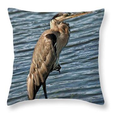 Sandra Anderson Throw Pillows