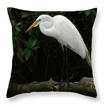 Throw Pillow featuring the photograph Great Egret by Anne Rodkin