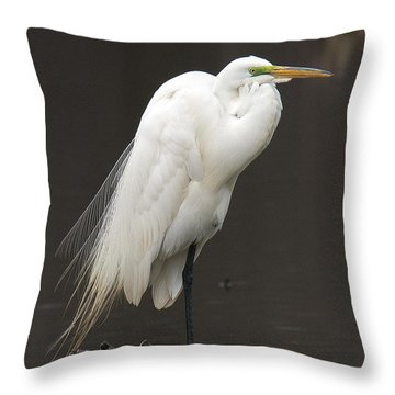 Great Egret Resting Dmsb0036 Throw Pillow