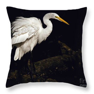 Throw Pillow featuring the photograph Great Egret Ruffles His Feathers by Art Whitton