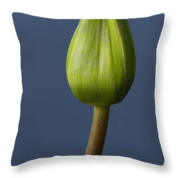 Great Expectations Throw Pillow by Carrie Cranwill