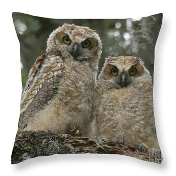 Great Horned Owl Babies Throw Pillow by Myrna Bradshaw