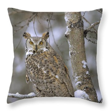 Great Horned Owl In Its Pale Form Throw Pillow by Tim Fitzharris