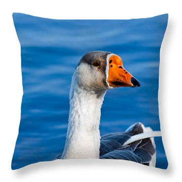 Greater White-fronted Goose Looking For A Mate Throw Pillow by Ann Murphy
