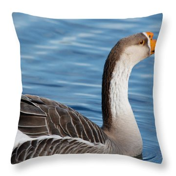 Greater White-fronted Goose Paddling Away Throw Pillow by Ann Murphy