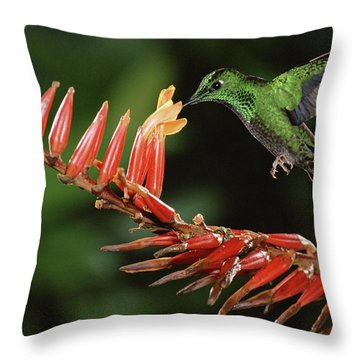 Green-crowned Brilliant Heliodoxa Throw Pillow by Michael & Patricia Fogden
