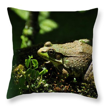 Green Frog Rana Clamitans Throw Pillow