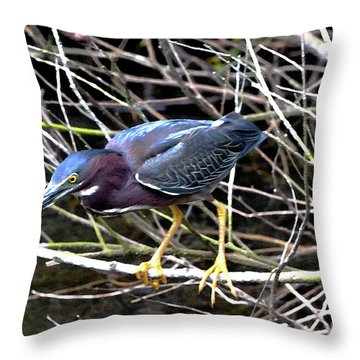 Throw Pillow featuring the photograph Green Heron by Pravine Chester