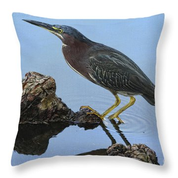 Green Heron Visiting The Pond Throw Pillow by Deborah Benoit