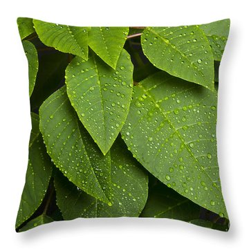 Green Leaves And Water Drops Throw Pillow by James BO  Insogna
