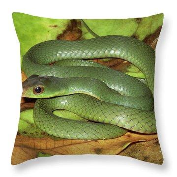 Green Racer Drymobius Melanotropis Amid Throw Pillow by Michael & Patricia Fogden