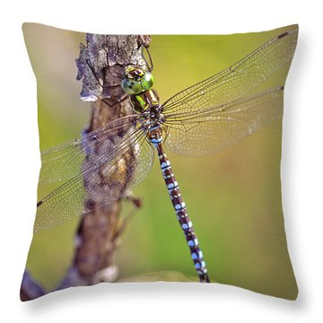 Green-striped Darner Dragonfly Throw Pillow