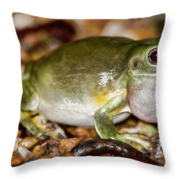 Green Tree Frog Throw Pillow by Douglas Barnard
