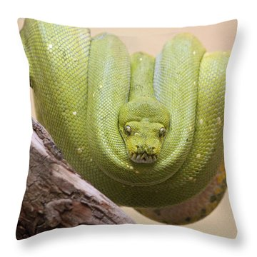 Green Tree Python Throw Pillow by Suzanne Gaff