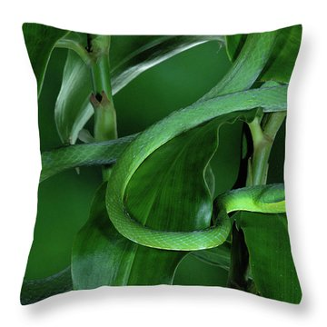 Green Vine Snake Oxybelis Fulgidus Throw Pillow by Michael & Patricia Fogden