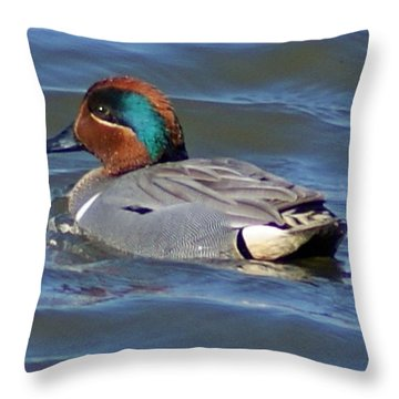 Green Winged Teal Throw Pillow by Joe Faherty