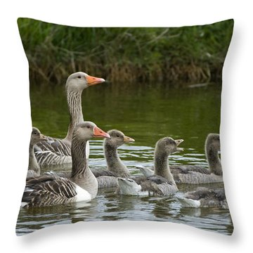 Greylag Goose Anser Anser Couple Throw Pillow by Willi Rolfes