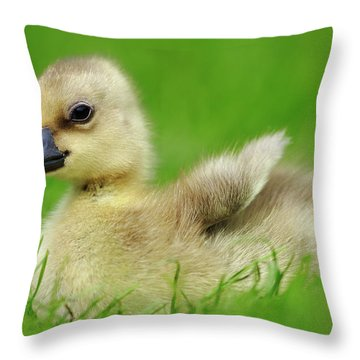 Greylag Goose Anser Anser Gosling Throw Pillow by Cyril Ruoso