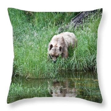 Grizzly Bear And Reflection On Prince Rupert Island Canada 2209 Throw Pillow
