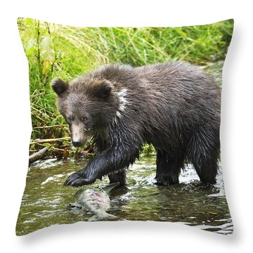 Grizzly Cub Catching Fish In Fish Creek Throw Pillow by Richard Wear