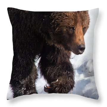 Throw Pillow featuring the photograph Grizzly On Snow by J L Woody Wooden