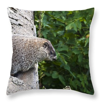 Groundhog Day Throw Pillow
