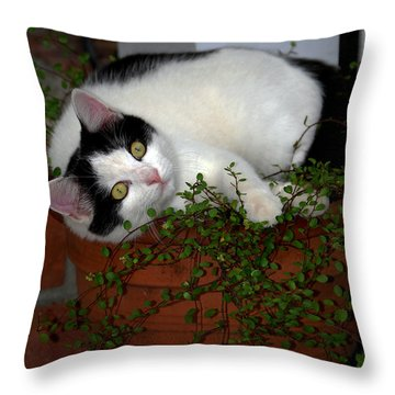 Growing A Kitten Throw Pillow by Skip Willits