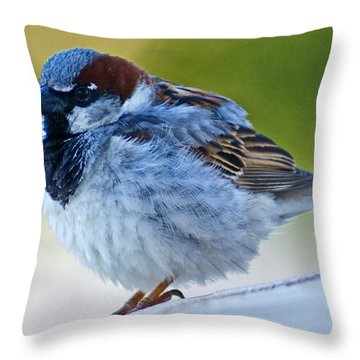 Throw Pillow featuring the photograph Guard Bird by Colleen Coccia