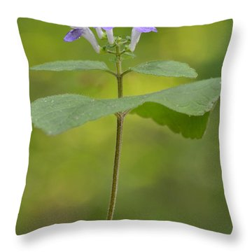 Throw Pillow featuring the photograph Hairy Skullcap II by JD Grimes