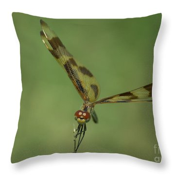 Halloween Pennant Dragonfly  Throw Pillow by Donna Brown