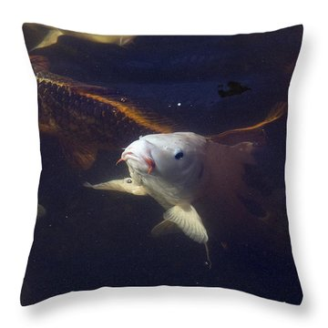 Handsome Throw Pillow by Kat Besthorn