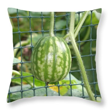 Hanging Watermelon Plant Throw Pillow by Barbara S Nickerson