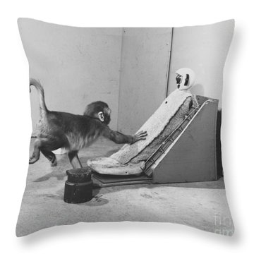 Harlow Monkey Experiment Throw Pillow by Science Source