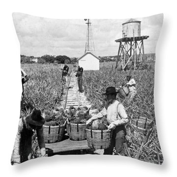 Harvesting Indian River Pineapples - C 1906 - Florida Throw Pillow by International  Images