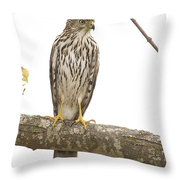 Hawk 4 Throw Pillow
