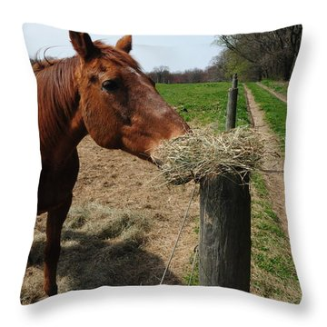 Hay Is For Horses Throw Pillow by Bill Cannon