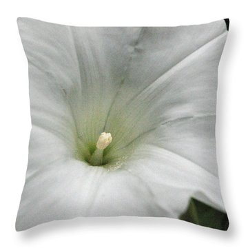Throw Pillow featuring the photograph Hedge Morning Glory by Tikvah's Hope