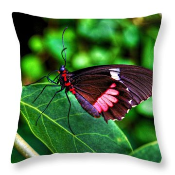 Hello Flutterby Throw Pillow by Randy Aveille