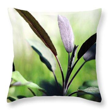 Herb Garden Purple Sage Throw Pillow