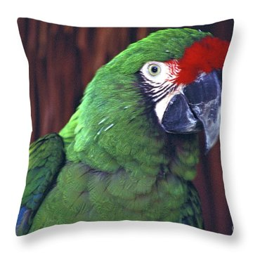 Here's Looking At You Military Macaw Riviera Maya Mexico Throw Pillow