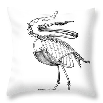 Hesperornis Throw Pillow by Science Source