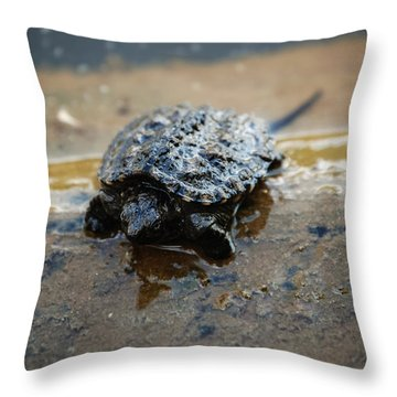 Hey Hold Up. Throw Pillow by Kelly Rader